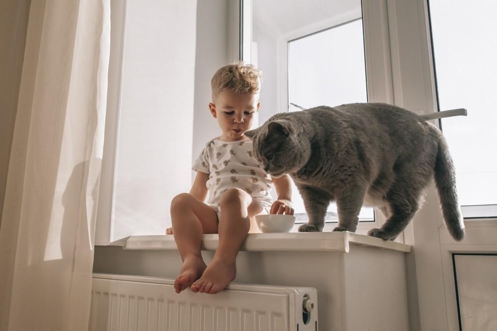 Чем можно заразиться от домашних животных?