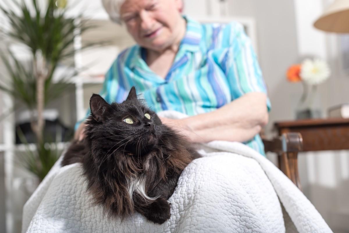 Фелинотерапия. Что и как лечат коты?