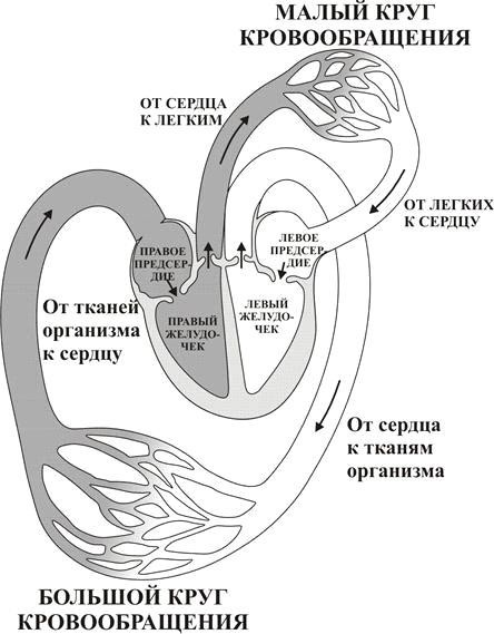 Приобретенные пороки сердца: симптомы и лечение